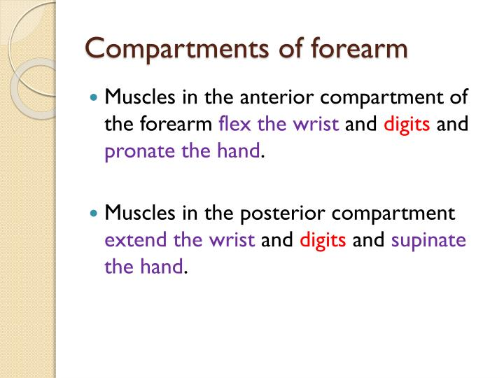 Compartments of forearm