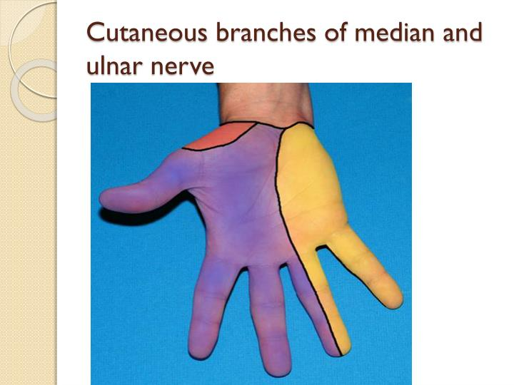 Cutaneous
