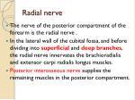 radial nerve1
