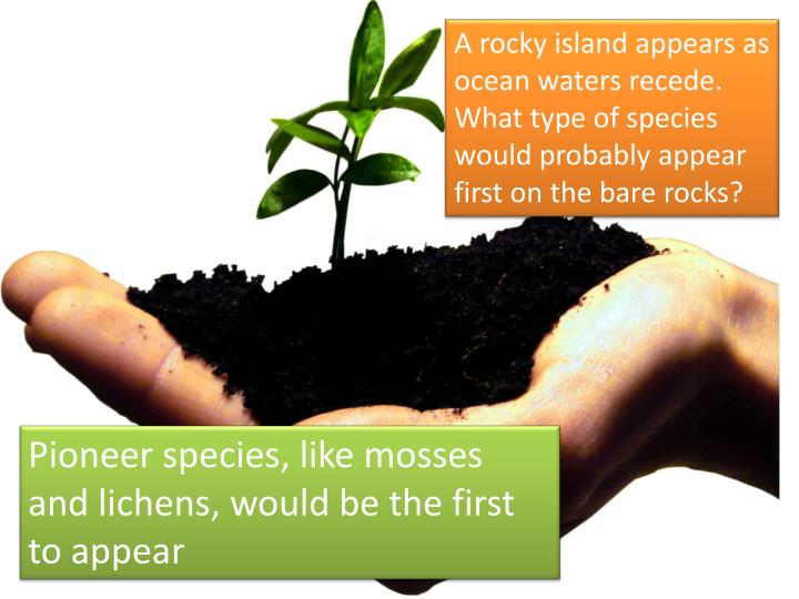 A rocky island appears as ocean waters recede. What type of species would probably appear first on the bare rocks?