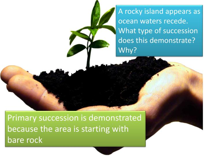 A rocky island appears as ocean waters recede. What type of succession does this demonstrate? Why?