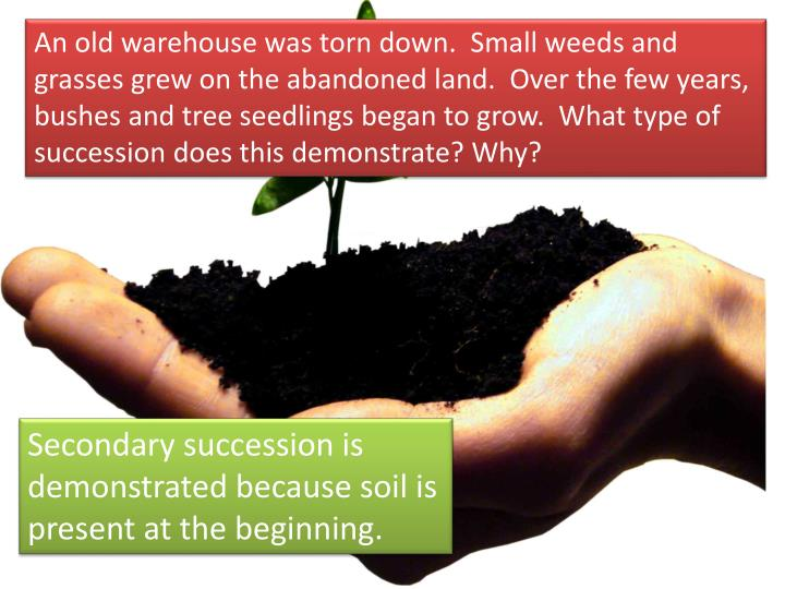 An old warehouse was torn down.  Small weeds and grasses grew on the abandoned land.  Over the few years, bushes and tree seedlings began to grow.  What type of succession does this demonstrate? Why?