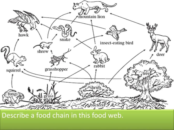 Describe a food chain in this food web.