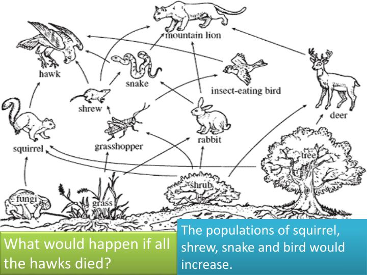 The populations of squirrel, shrew, snake and bird would increase.