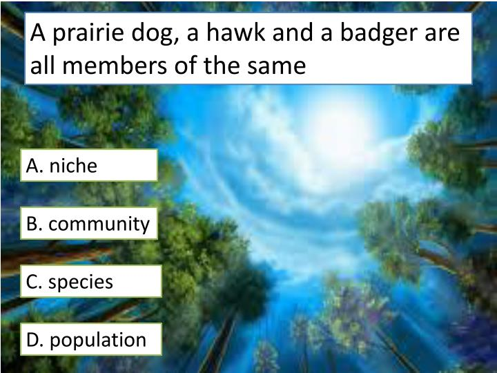 A prairie dog, a hawk and a badger are all members of the same
