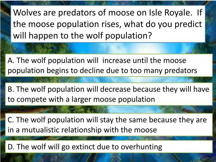 Wolves are predators of moose on Isle Royale.  If the moose population rises, what do you predict will happen to the wolf population?