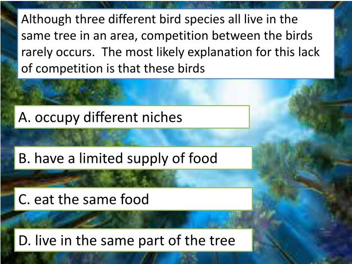 Although three different bird species all live in the same tree in