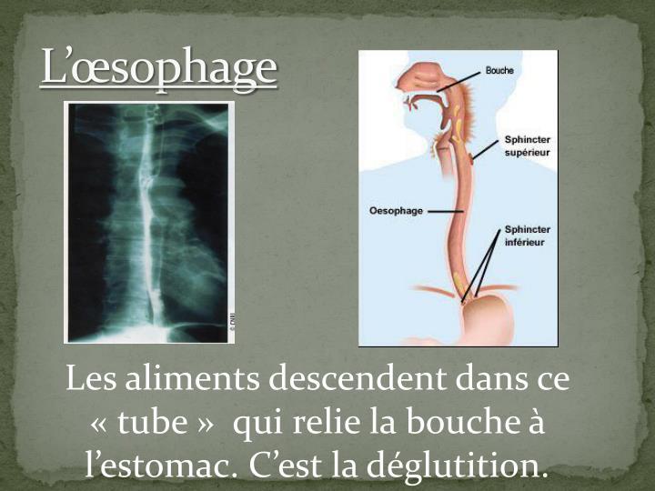 L'œsophage