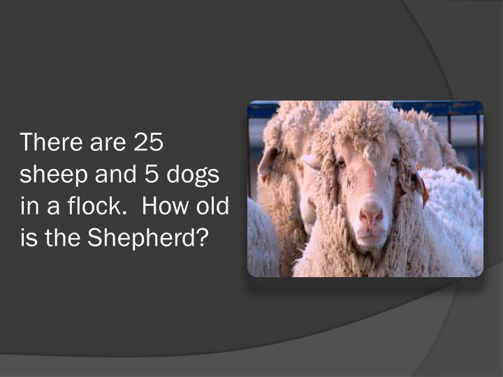 There are 25 sheep and 5 dogs in a flock.  How old is the Shepherd?