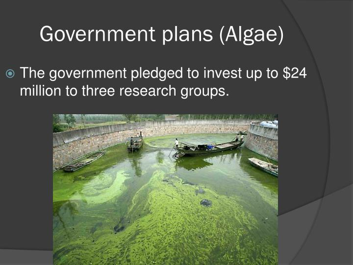 Government plans (Algae)