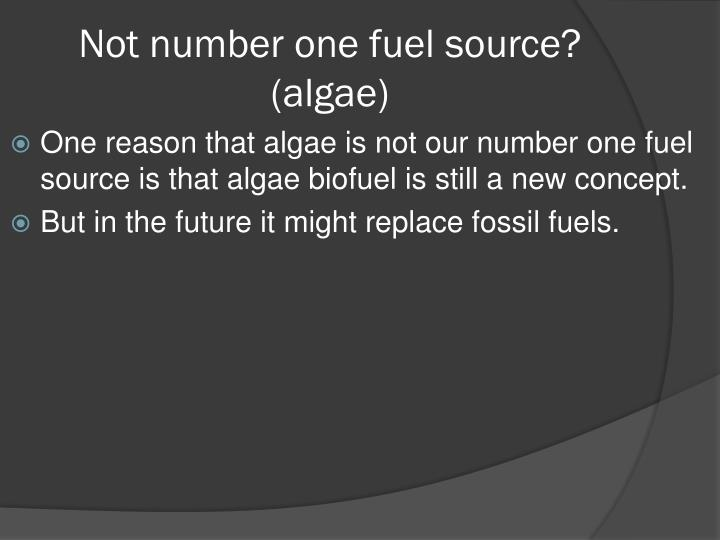 Not number one fuel source? (algae)