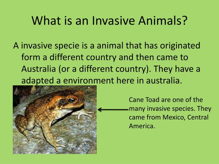 What is an Invasive Animals?