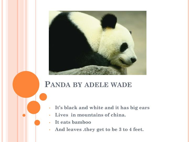 Panda by