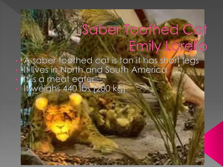 Saber Toothed Cat