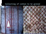 collecting of cotton to be ginned