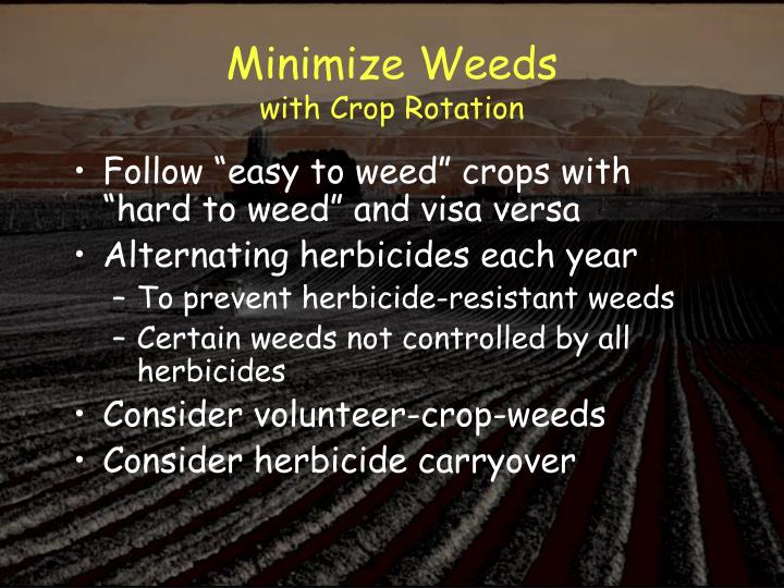 Minimize Weeds