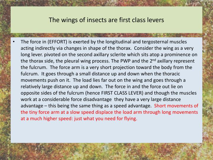 The wings of insects are first class levers