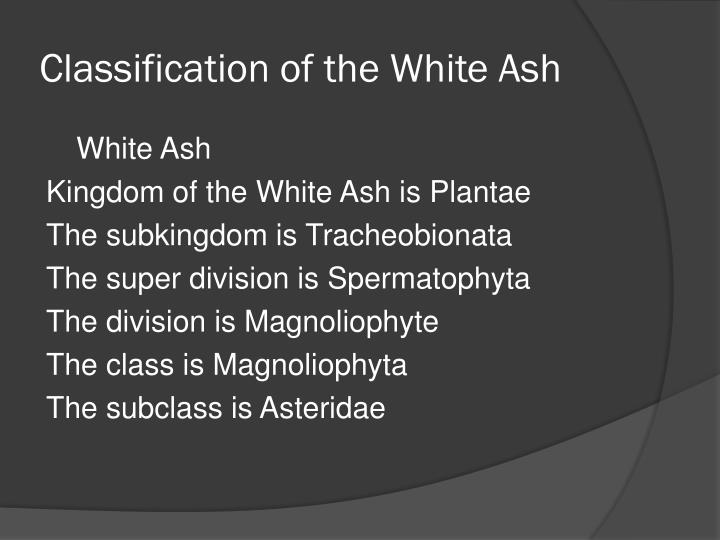 Classification of the White Ash