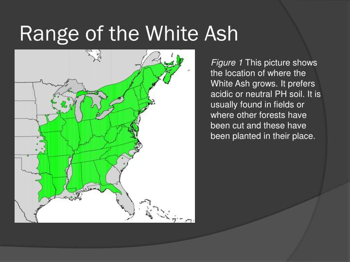 Range of the White Ash