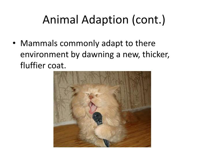 Animal Adaption (cont.)