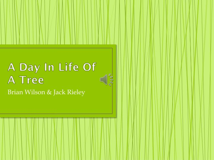 A day in life of a tree