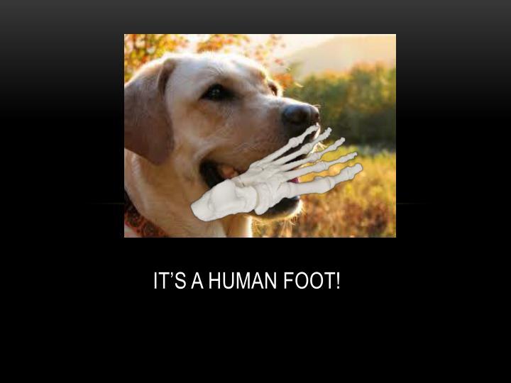 IT'S A HUMA