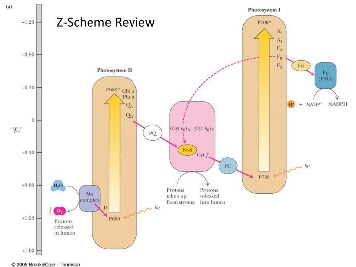 Z-Scheme Review