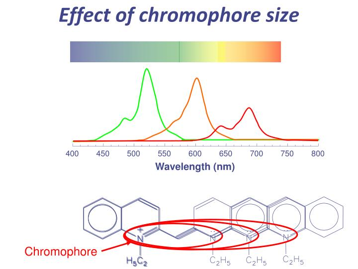 Effect of chromophore size