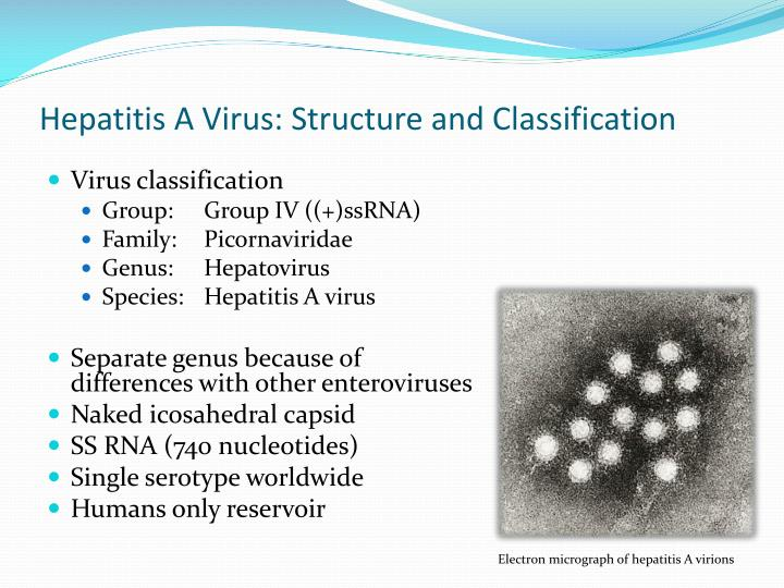 Hepatitis A Virus: Structure and Classification