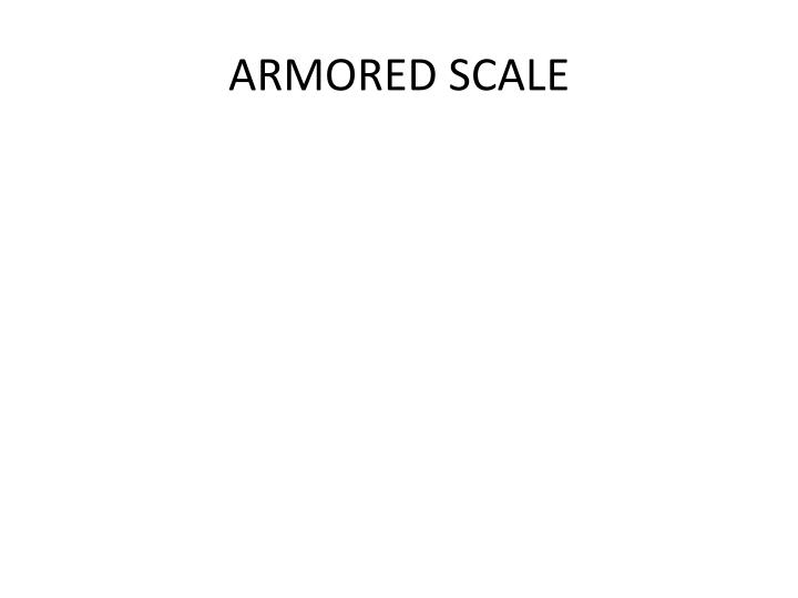 ARMORED SCALE