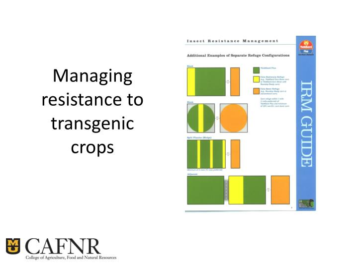 Managing resistance to transgenic crops
