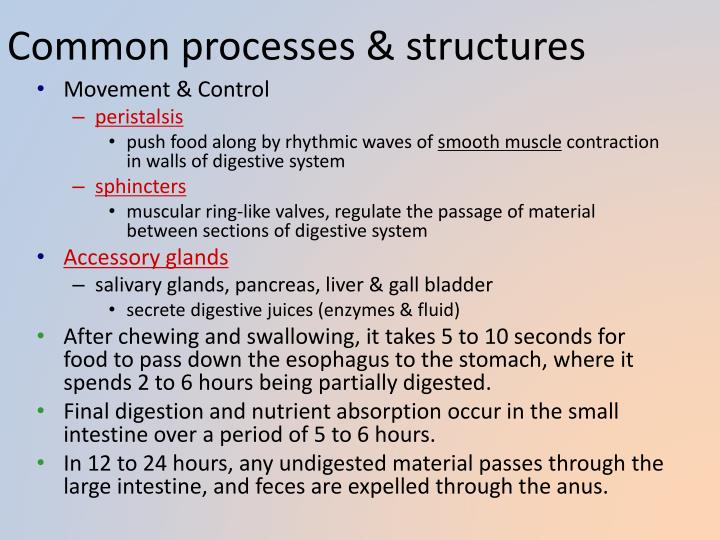 Common processes & structures