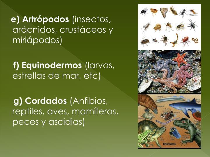 e) Artrópodos