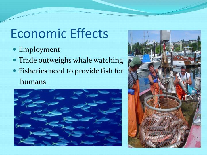 Cause and effect essay on Japanese whaling