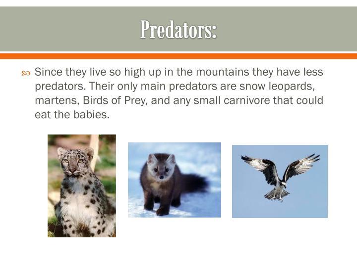 Predators:
