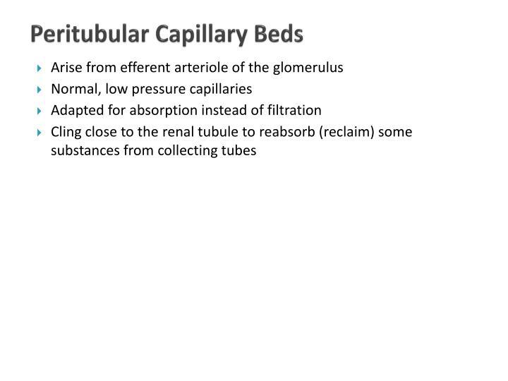 Peritubular Capillary Beds