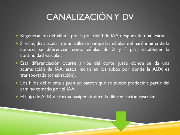 Canalización y DV