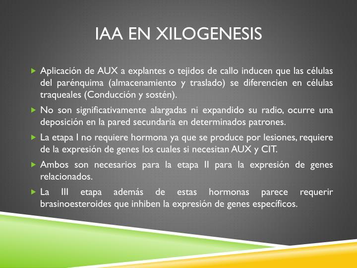 IAA en Xilogenesis
