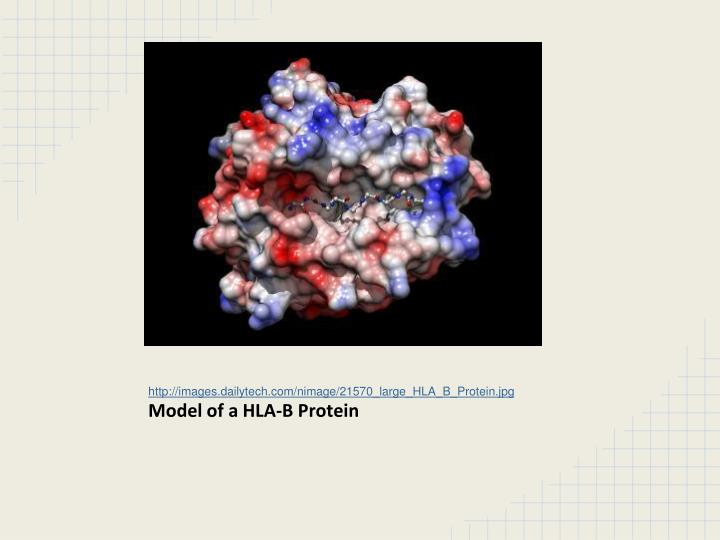 http://images.dailytech.com/nimage/21570_large_HLA_B_Protein.jpg