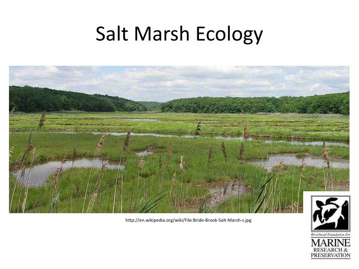 Salt marsh ecology