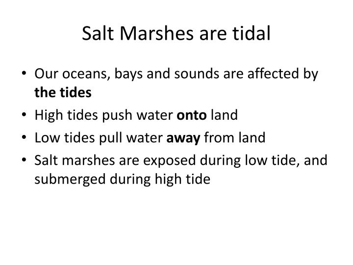Salt Marshes are tidal