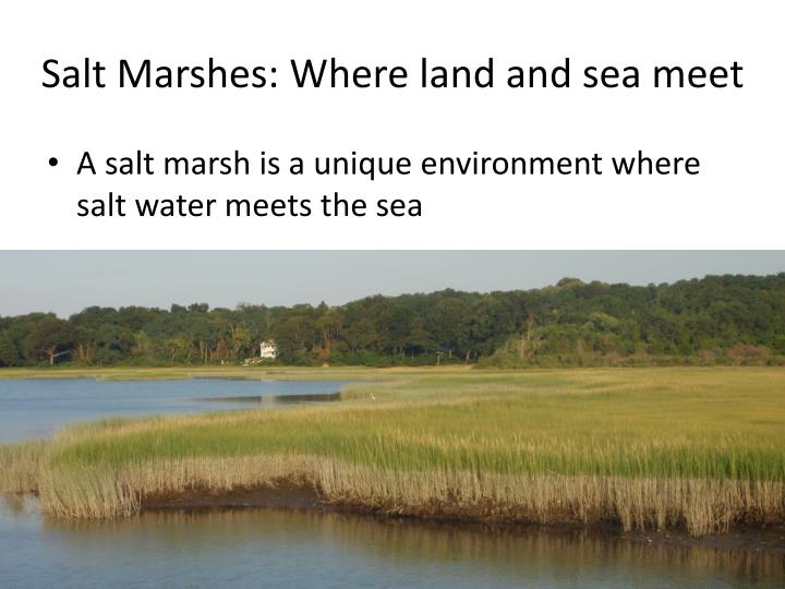 Salt marshes where land and sea meet