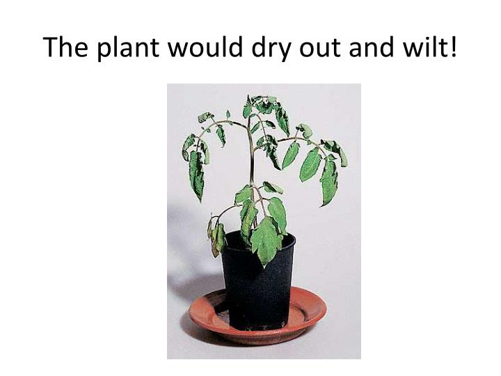 The plant would dry out and wilt!