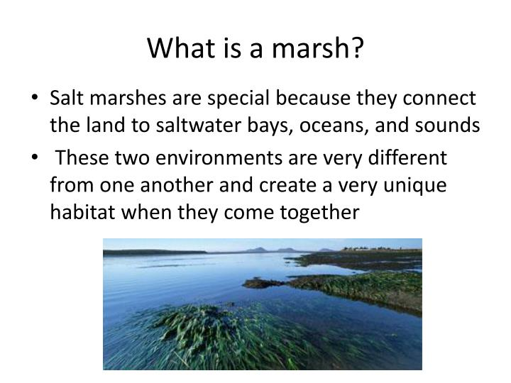 What is a marsh