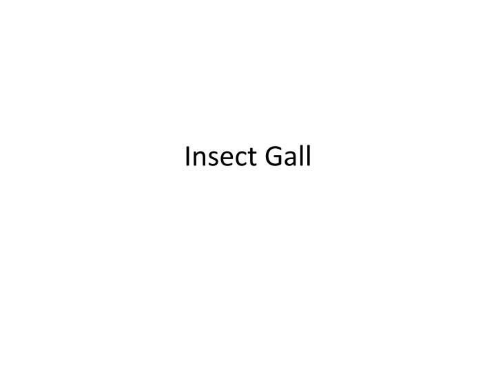 Insect Gall