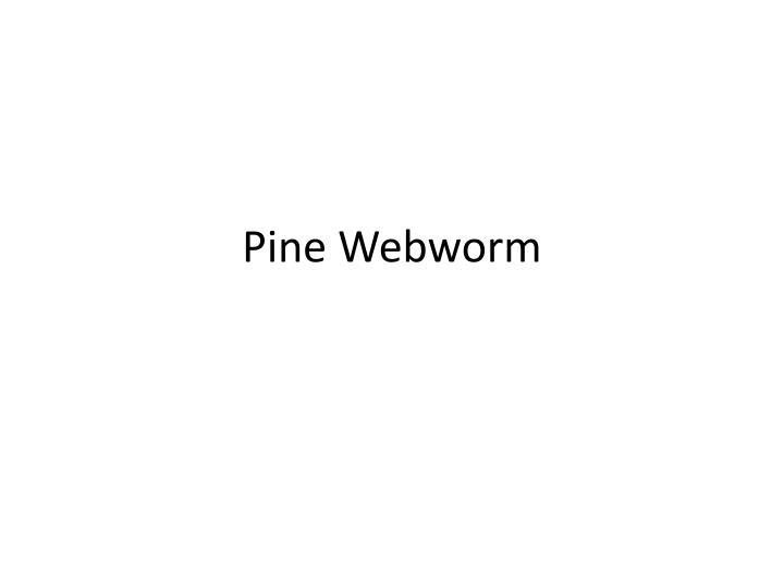 Pine Webworm