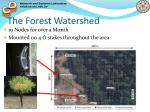 the forest watershed
