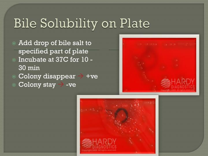 Bile Solubility on Plate