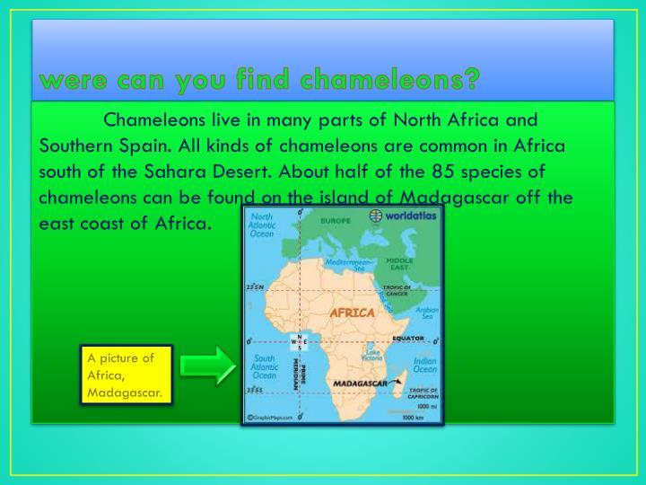 were can you find chameleons?