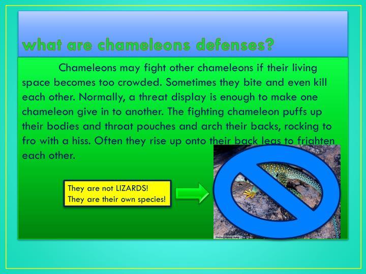 what are chameleons defenses?